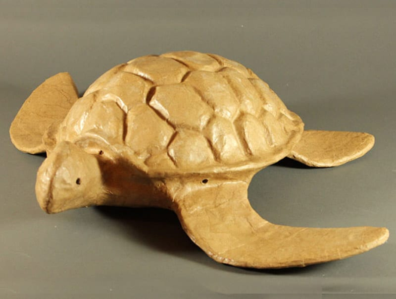 adult blog turtle