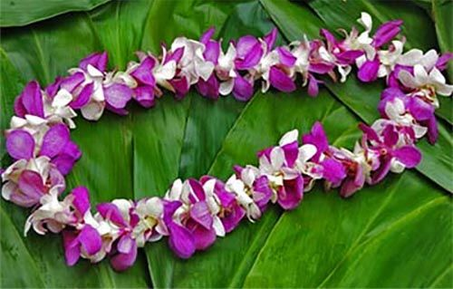 Lei for Burial at Sea