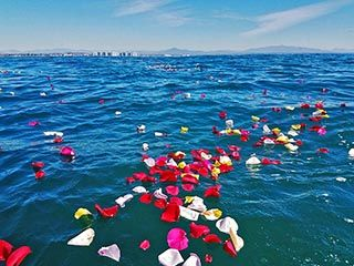Rose petals floating on the ocean